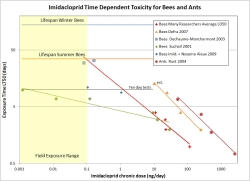 Imidacloprid Time Dependent Toxicity for Bees and Ants